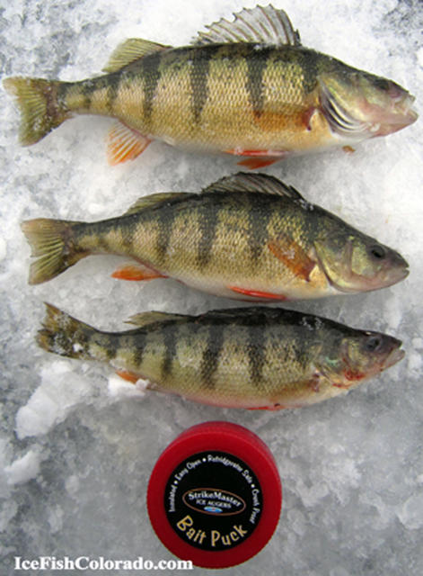 11 mile Colorado ice fishing pictures