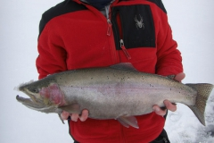 7lbs cutbow close up.preview