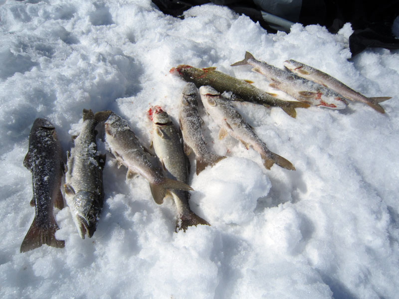 Ice fishing at Blue Mesa for lake trout and brown trout