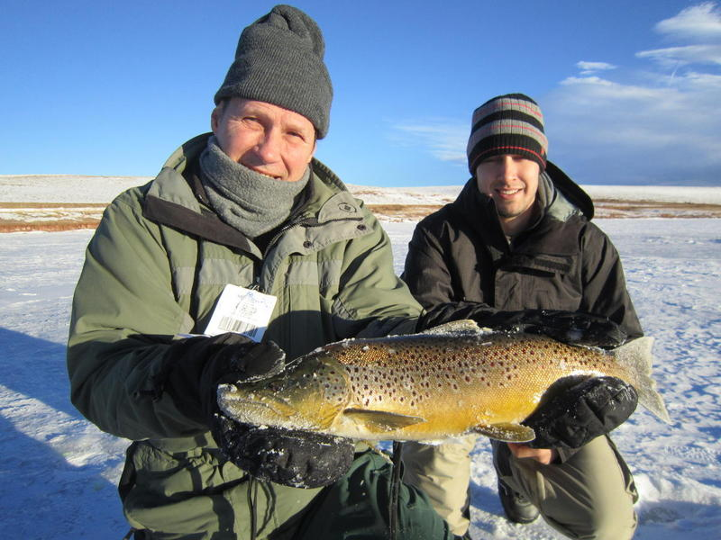 Beautiful Antero Brown Trout!