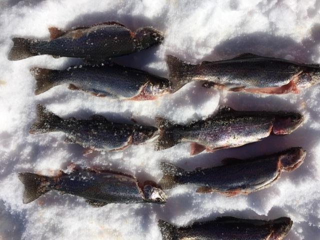 Tarryall reservoir bite takes work but pays off ice for Tarryall reservoir fishing report