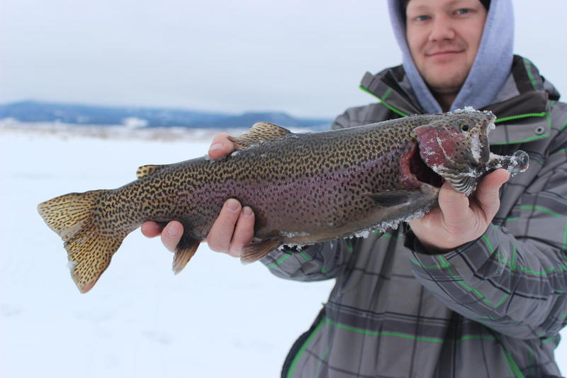 Ice Fishing Report Archives - Ice Fish Colorado
