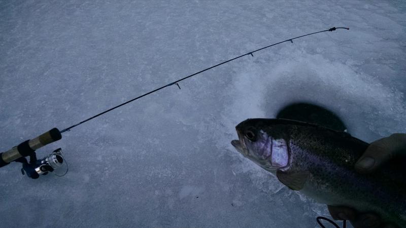 Blue Mesa rainbow trout through the ice december 2015